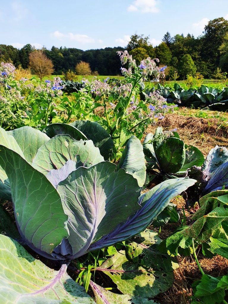 Ausbildung in Hotelfach und Gastronomie - Garten