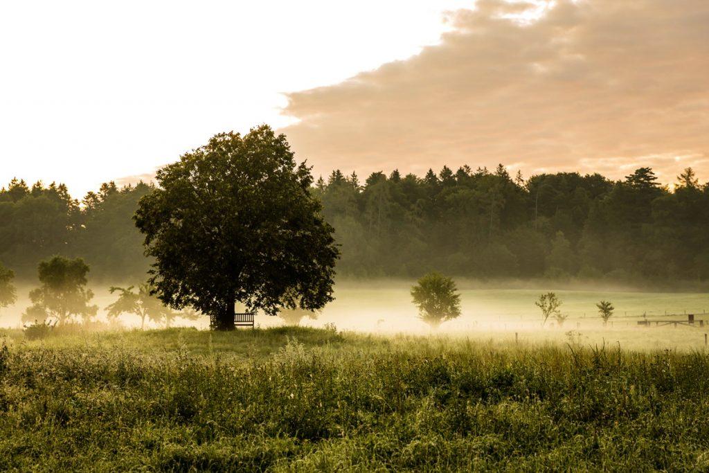 Neues aus Sonnenhausen: Nebelstimmung auf der Lichtung