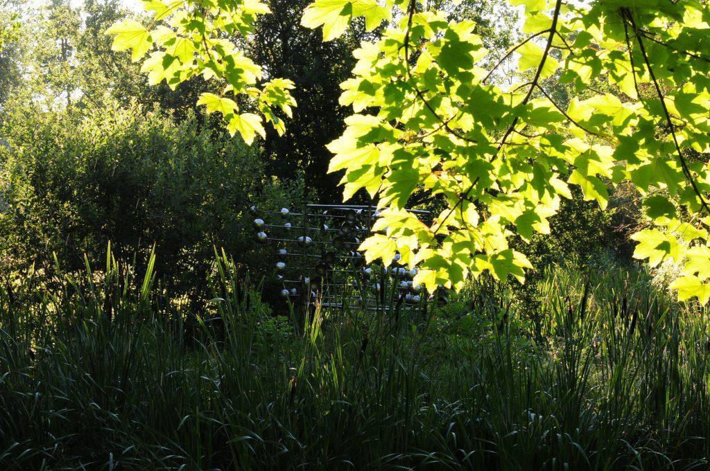 Morgenstimmung - Sommer im Wald