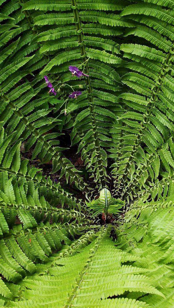 Farn im Detail - Sommer im Wald