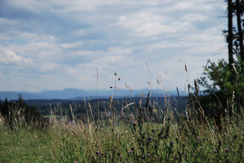 Sommer im Wald mit Bergblick