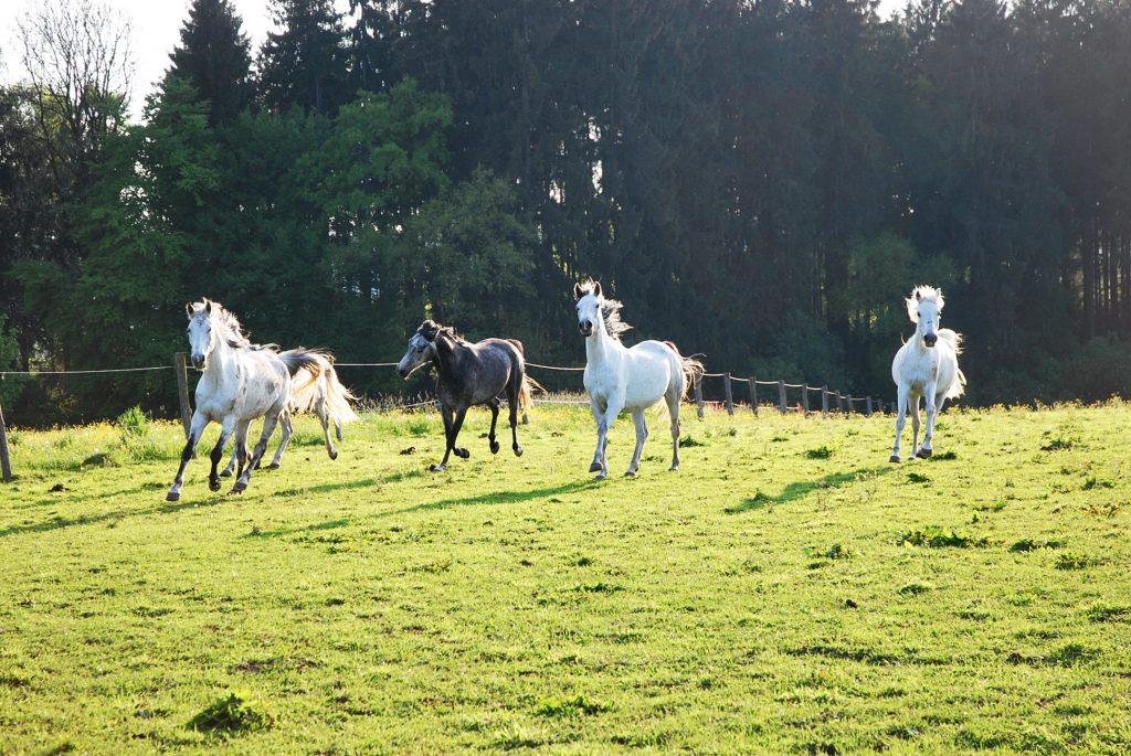 hinter den Pferdekoppeln